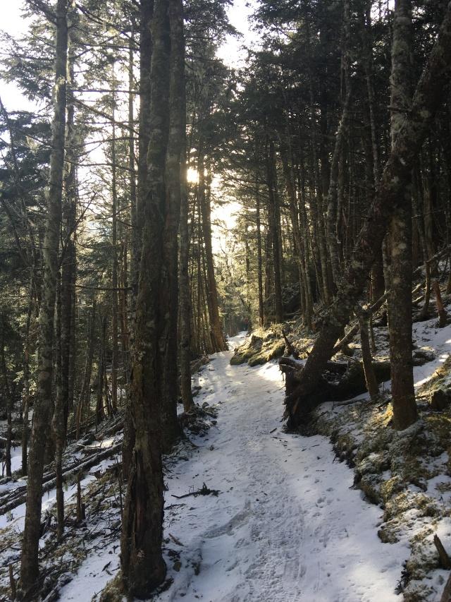 Ammonoosuc Ravine Trail