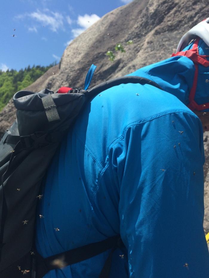 Black Diamond Alpine Start Hoody Review